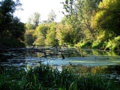 Imagini Dunare