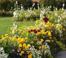 Flori la Lucinel