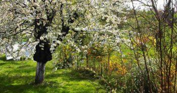 Lucinel Vienna spring garden