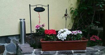 Flori Pensiunea Lucinel Viena