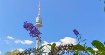 Flori - Parcul Dunarii - Obiective Turistice Viena
