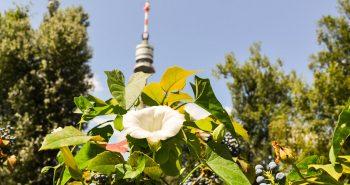 Flori - Parcul Dunarii din Viena