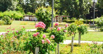 Trandafiri - Parcul Dunarii Viena