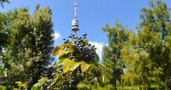 Turnul Dunarii (Donau Turm) si Parcul Dunarii (Donaupark) din Viena